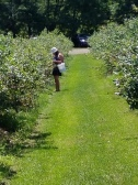 Mother picking her blueberries and jamming to her tunes!